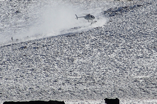 BLM contractors use helicopters, flying low to the ground, to frighten and stampede wild horses (photo by Laura Leigh)