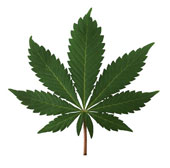 Election or reefer madness?