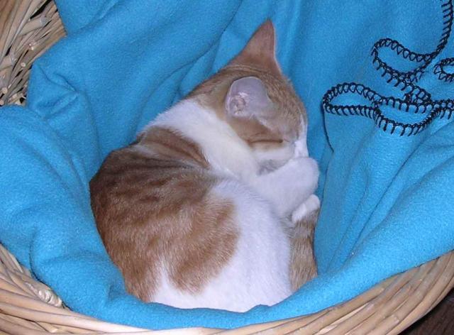 Soren as a kitten